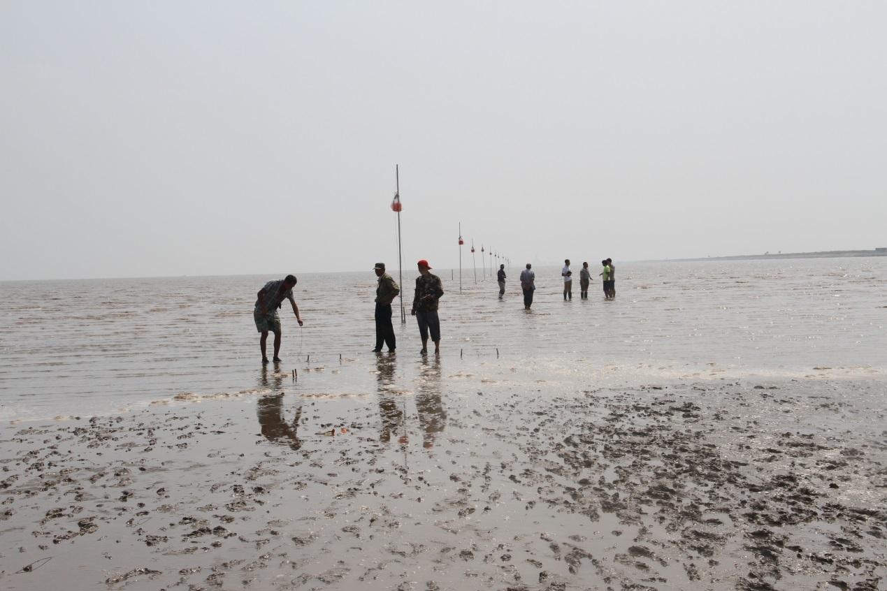 近岸海陆交互带的地层结构复杂,受潮汐和泥质,泥砂质海滩等沉积物影响